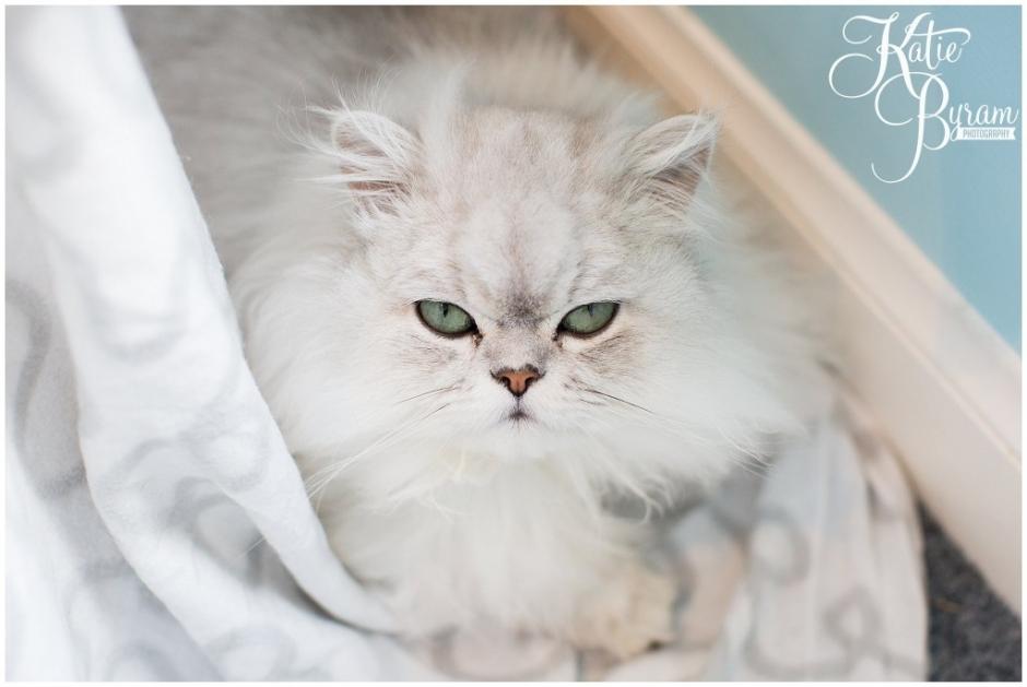 edinburgh cat cafe, cat cafe scotland, maison de muggy, cat themed wedding, katie byram photography, scotland cat cafe, cats, edinburgh wedding photographer