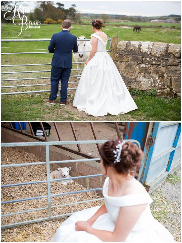 high house farm brewery, matfen, barn wedding northumberland, outdoor wedding northumberland, katie byram photography, animal themed wedding, healey barn,